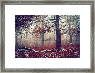 First Snow In Fall Woods Framed Print