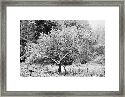 First Snow Framed Print by Jennifer Compton