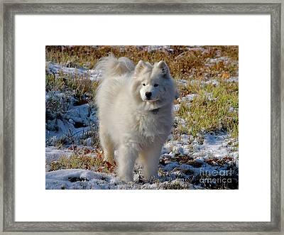 First Snow Framed Print by Lois Bryan