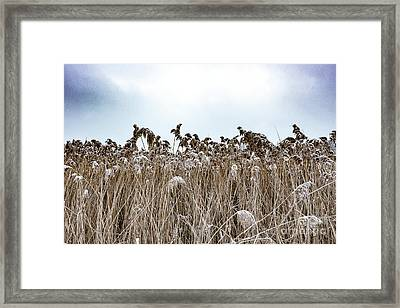 First Snow On Roman Reed Framed Print