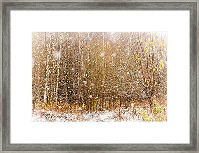 First Snow. Snow Flakes I Framed Print by Jenny Rainbow
