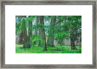 First Snowfall Framed Print