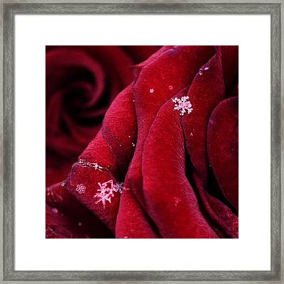 First Snowflakes With Love Framed Print by Floriana Barbu