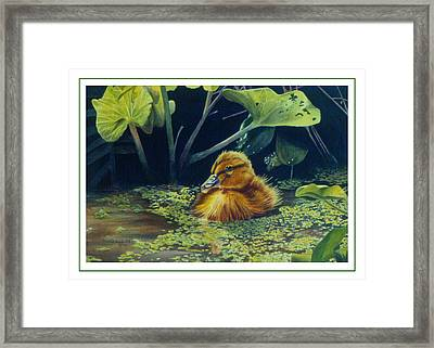 Framed Print featuring the painting First Spring - Mallard Duckling by Bob Nolin