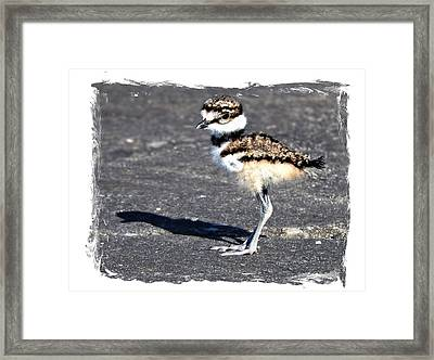 First Steps Framed Print by Laura Ragland