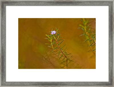 First To Flower Framed Print by Az Jackson