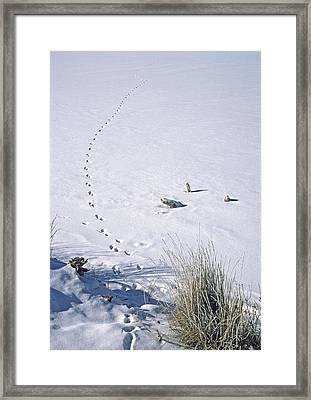 First Tracks Framed Print by Bruce Gilbert