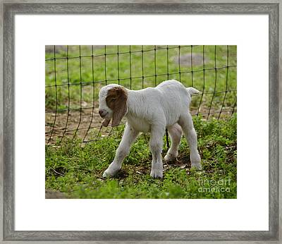 First Twin Framed Print by Debby Pueschel