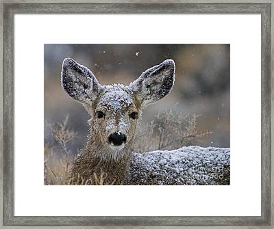 First Winter-signed Framed Print