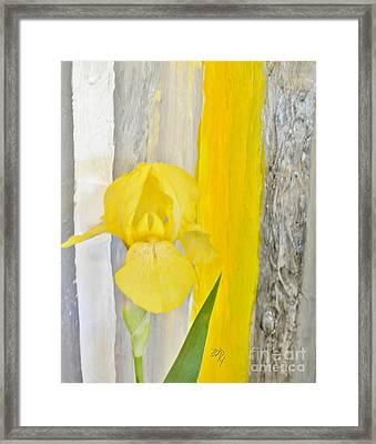 First Yellow Iris Framed Print by Marsha Heiken