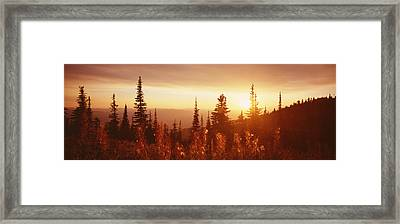 Firweed At Sunset, Whitefish, Montana Framed Print by Panoramic Images
