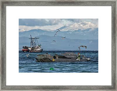 Framed Print featuring the photograph Fish Are Flying by Randy Hall