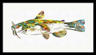 Catfish Mixed Media Framed Prints