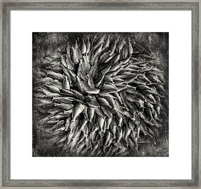 Fish By Design Framed Print by Nichon Thorstrom