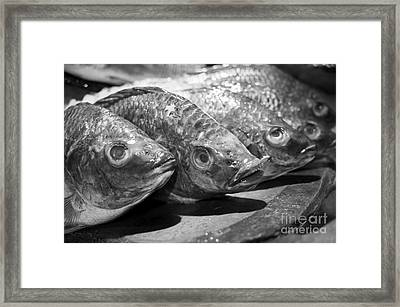 Framed Print featuring the photograph Fish by Dean Harte