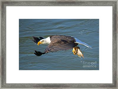 Fish Dinner Framed Print by Mike Dawson