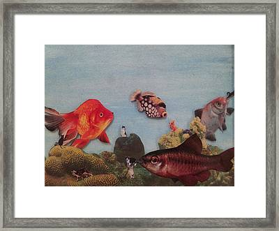 Fish Eating Cats. Framed Print by William Douglas