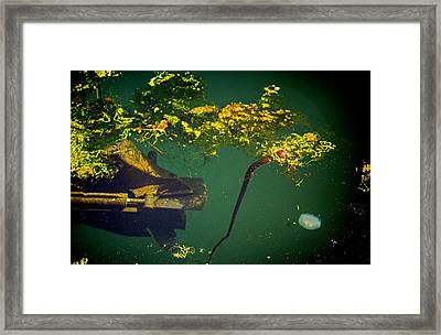 Framed Print featuring the photograph Fish Eye View by Dale Stillman