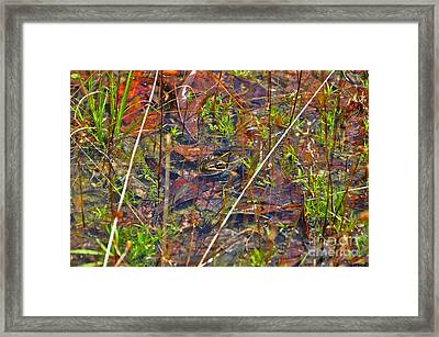 Fish Faces Frog Framed Print by Al Powell Photography USA