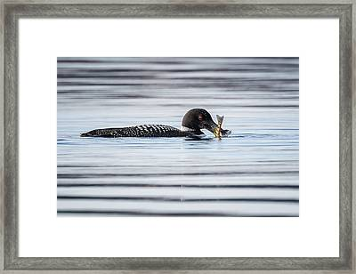 Fish For Lunch Framed Print by Bill Wakeley