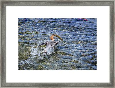 Framed Print featuring the photograph Fish Gulp by David Lawson