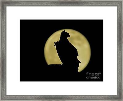 Fish Hawk Silhouette Framed Print