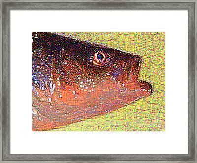 Fish Head Framed Print by Wingsdomain Art and Photography
