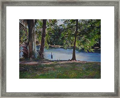 Fish Hunter's Of Palmetto Dunes Framed Print