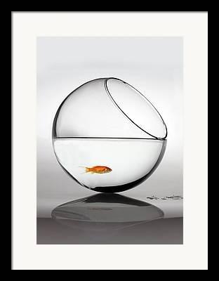 Fishbowl Framed Prints