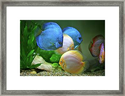 Fish In Water Framed Print