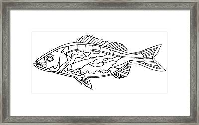 Fish Lines Framed Print by Baya Clare
