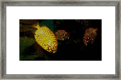 Fish Framed Print by Misty VanPool