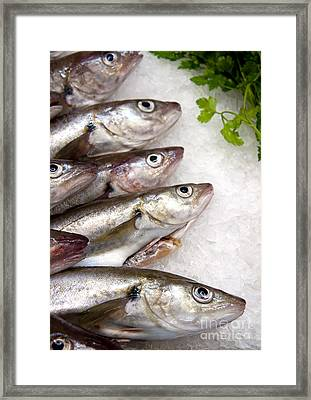 Fish On Ice Framed Print