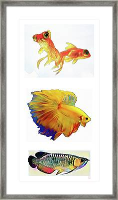 Fish - Original Watercolors Framed Print by Roger Smith