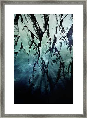 Fish Pattern Framed Print by Tom Gowanlock