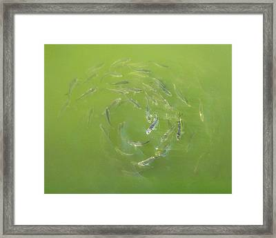 Fish Portal Framed Print