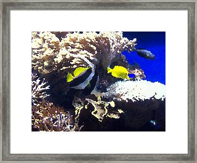 Fish Framed Print by Rodger Mansfield