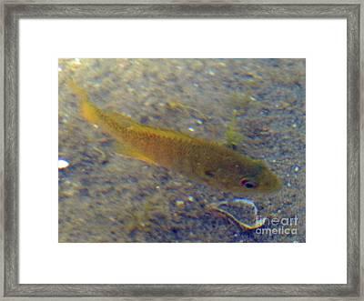 Fish Sandy Bottom Framed Print