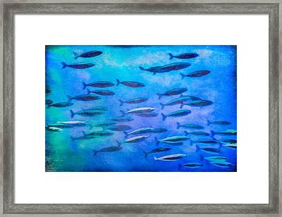 Fish School Framed Print by Priya Ghose
