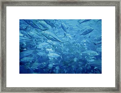 Fish Schooling Harmonious Patterns Throughout The Sea Framed Print by Christine Till