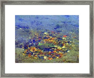 Fish Spawning Framed Print