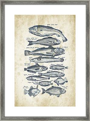 Fish Species Historiae Naturalis 08 - 1657 - 01 Framed Print by Aged Pixel