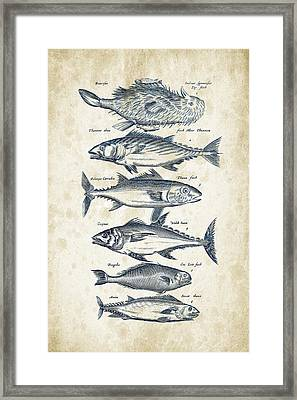 Fish Species Historiae Naturalis 08 - 1657 - 03 Framed Print by Aged Pixel