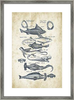 Fish Species Historiae Naturalis 08 - 1657 - 07 Framed Print by Aged Pixel