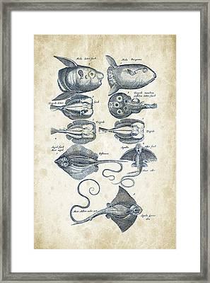 Fish Species Historiae Naturalis 08 - 1657 - 09 Framed Print by Aged Pixel