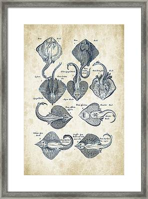 Fish Species Historiae Naturalis 08 - 1657 - 10 Framed Print by Aged Pixel