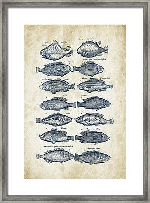 Fish Species Historiae Naturalis 08 - 1657 - 13 Framed Print by Aged Pixel