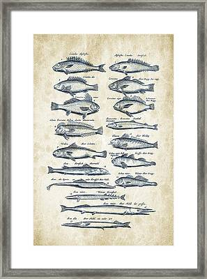 Fish Species Historiae Naturalis 08 - 1657 - 15 Framed Print by Aged Pixel