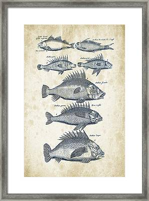Fish Species Historiae Naturalis 08 - 1657 - 16 Framed Print by Aged Pixel