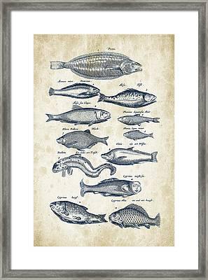 Fish Species Historiae Naturalis 08 - 1657 - 27 Framed Print